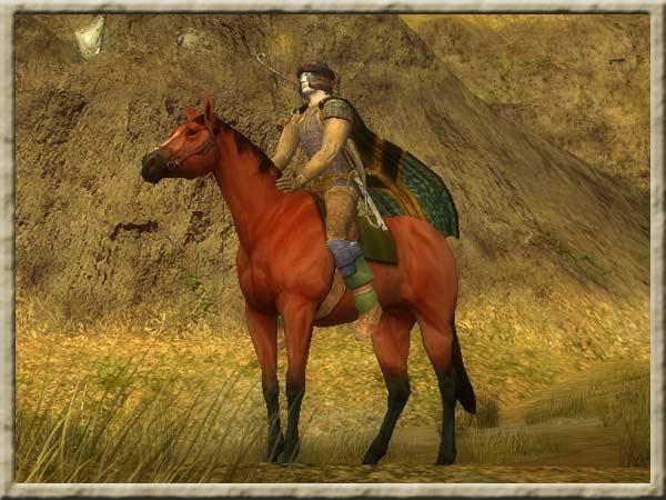 pferde des nordens